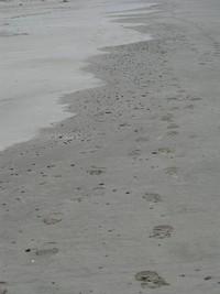 Bay Ocean sand