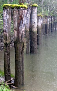 Blue Slough pilings