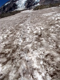 Camp Muir snow trail