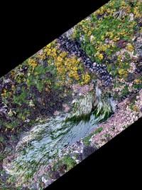 Cape Flattery flora
