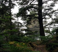 Cape Flattery through the trees