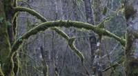Cedar Creek Park moss
