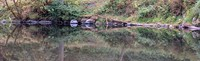 Cedar River Landsburg