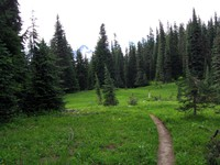 Cowlitz Divide trail