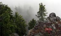 Goat Peak tree
