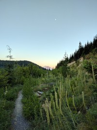 Hansen Ridge Trail