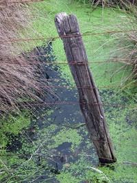 Hatton Road wet fence 117