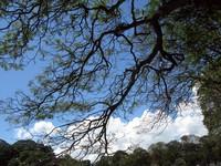 Kandy Lake tree