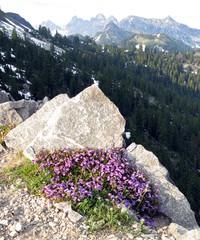 Kendall Katwalk flowers
