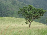 Little Adams Peak tree