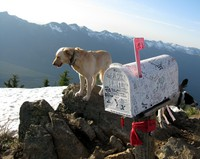 Mail Box Peak dog