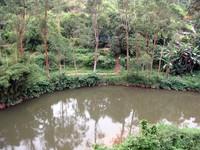 Maskeliya river bend