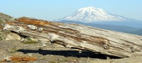 Mt Log Adams