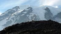 Mt Rainier from above Paradise