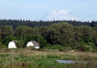 Nisqually barns and Mt Rainier