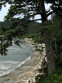 Olympic beach and tree
