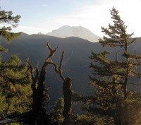 Rainier from Palisades Trail