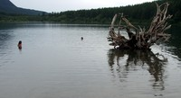Rattlesnake Lake stump