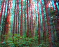 Rattlesnake Lake trail trees red cyan stereo