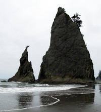 Rialto Beach teeth