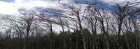 SE Washington trees