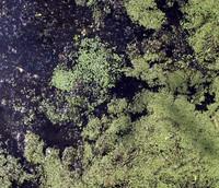 Soos Creek pattern