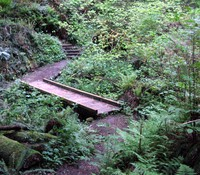 Squak Mountain trail bridge
