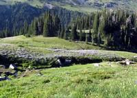 Summerland meadow