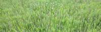 Tayler Mountain grass
