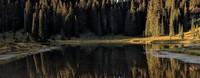 Tipsoo Lake tree reflections