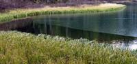 Upper Crystal Lake shore