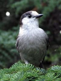 bird at Wagonwheel Lake
