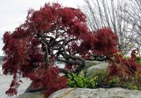 bremerton park tree