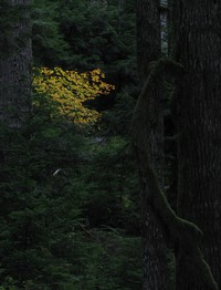 bright tree dark forest