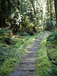carbon river wooden path