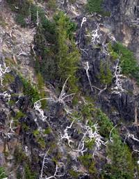 dead tree pattern