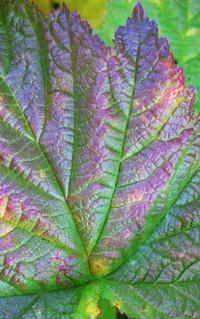fall weed
