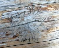 log scarab