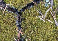 mossy pattern