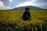 Imani in wildflowers east of Palmdale 1983