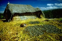 Lake Titicaca reed houses 1980