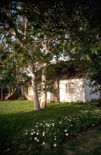 Muriel house with freeway daisies in early 80s