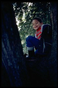 Scott in tree