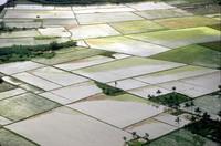 Vietnam rice paddies from the air