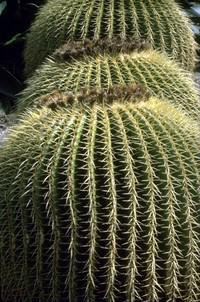 cactus pattern shot