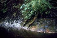 creek at Short Sands 1971