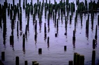 old pilings on Washington side of Columbia River near mouth 1971
