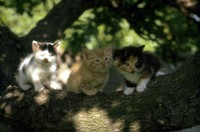 sadly the kittens in the apricot tree are doomed 1982