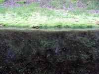 pond on pct