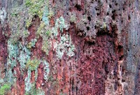 rotten tree on wallace falls trail